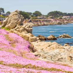Pacific Grove 78 hotels