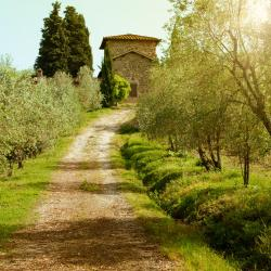 Greve in Chianti 176 hotels