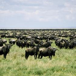 Serengeti National Park 5 فنادق