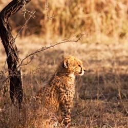 Kapama Private Game Reserve 4 lodges