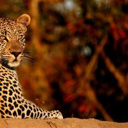 Timbavati Game Reserve 5 Glamping Sites