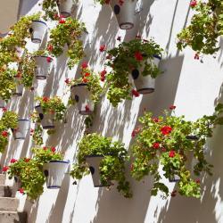 Puente Genil 4 hotels
