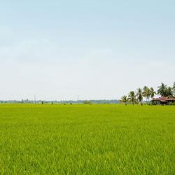 Puchong 186 hotels