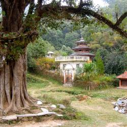 Bandipur 5 guest houses