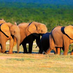 Addo 3 Glamping Sites