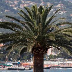 Marina d'Andora 75 hotell