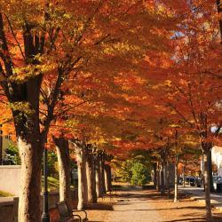 Princeton 30 hotels