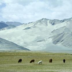 Kashgar 8 hotels