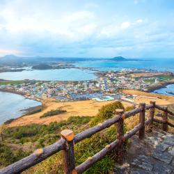 Jeju 55 homestays