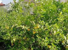Lemontree, hotel in Athens