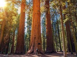 The Sequoia Hut!, casa o chalet en Three Rivers