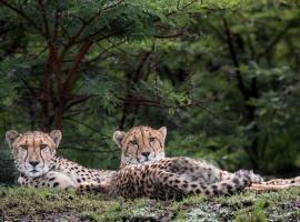 Cheetah Ridge Lodge, lodge in Nambiti Private Game Reserve
