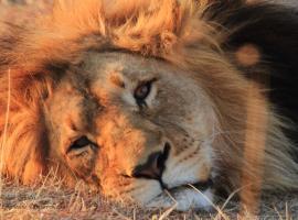 Umzolozolo Private Safari Lodge & Spa, lodge in Nambiti Private Game Reserve