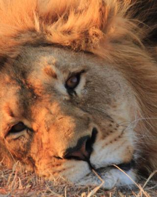 Umzolozolo Private Safari Lodge & Spa