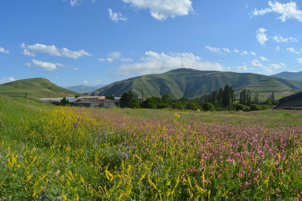 Природа в окрестностях of country house