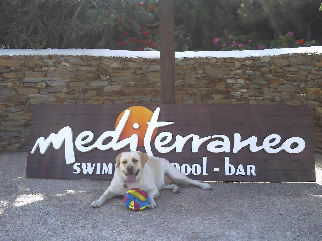Pet or pets staying with guests at Hotel Mediterraneo
