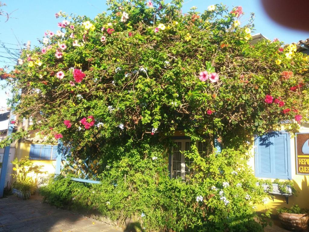 Um jardim em Pousada Repouso do Guerreiro