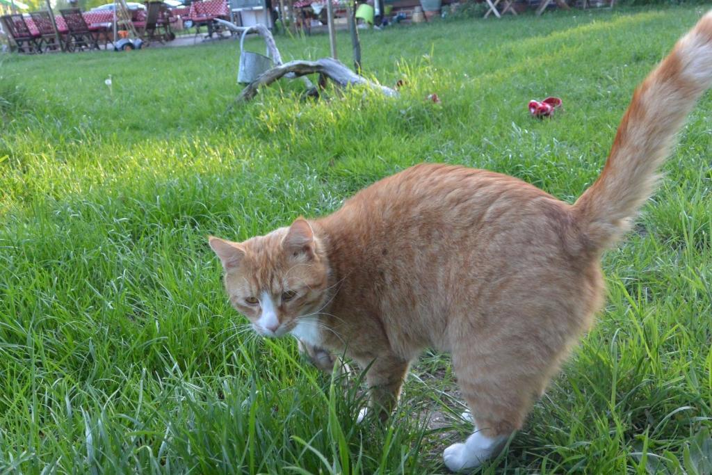 """Haustiere von Gästen der Unterkunft Ferienhof """"Zum Spreewäldchen"""""""