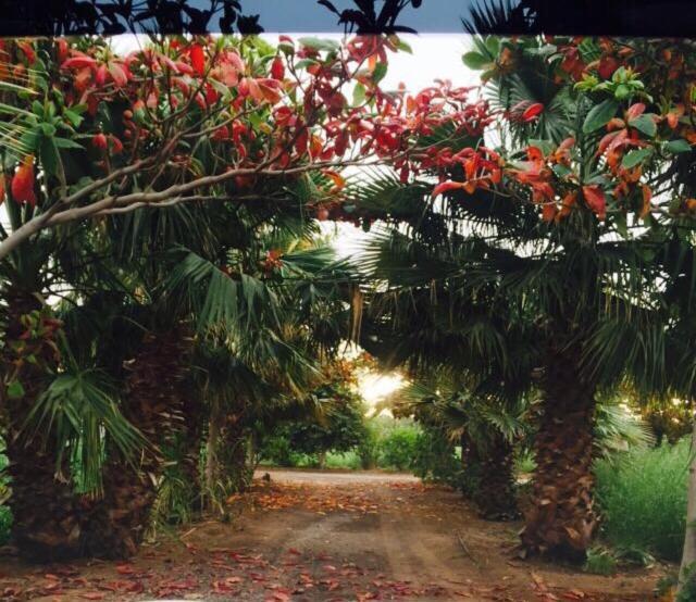 A garden outside Revaloo farm (Family Only)