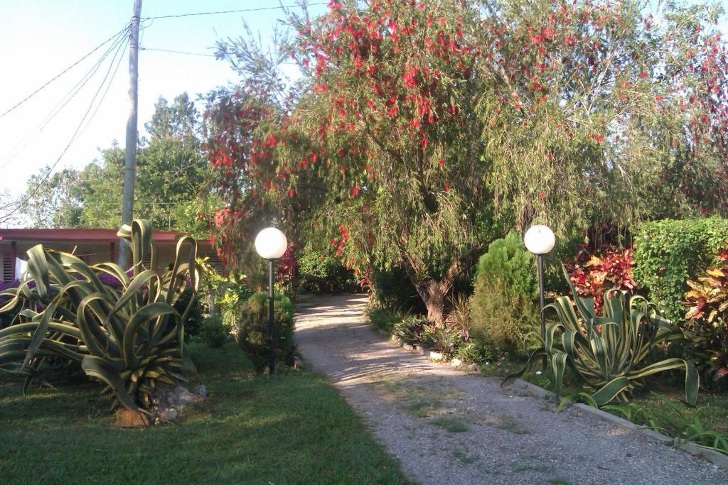 A garden outside Casa Los Sauces