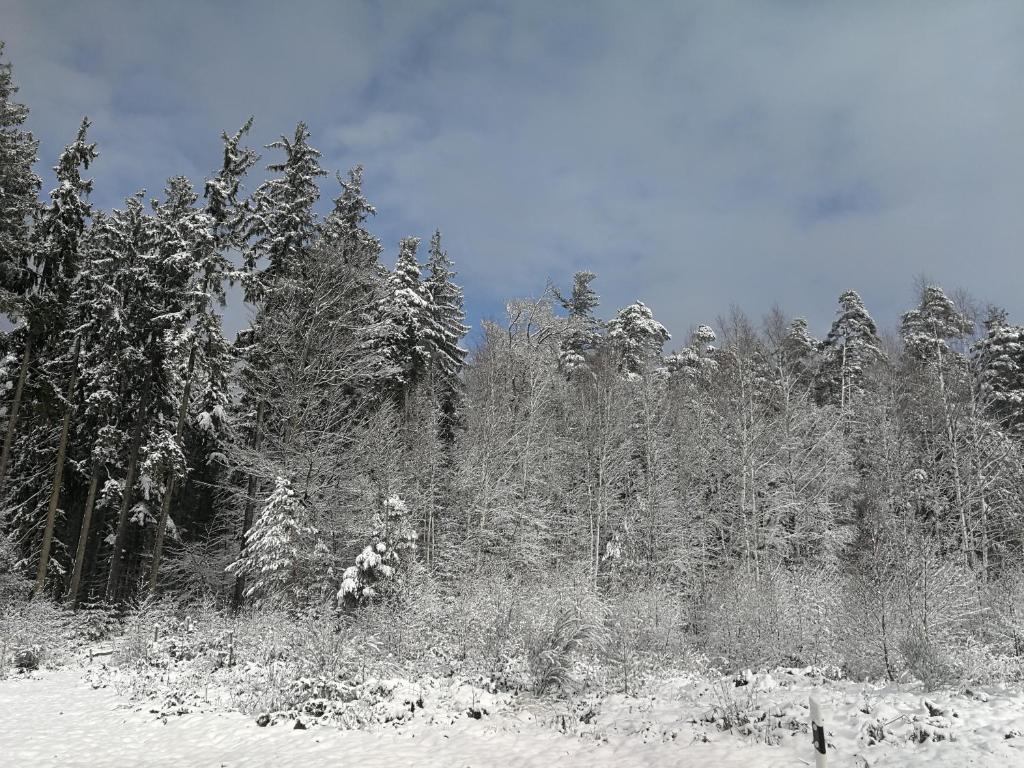 Gästehaus Bacchus during the winter