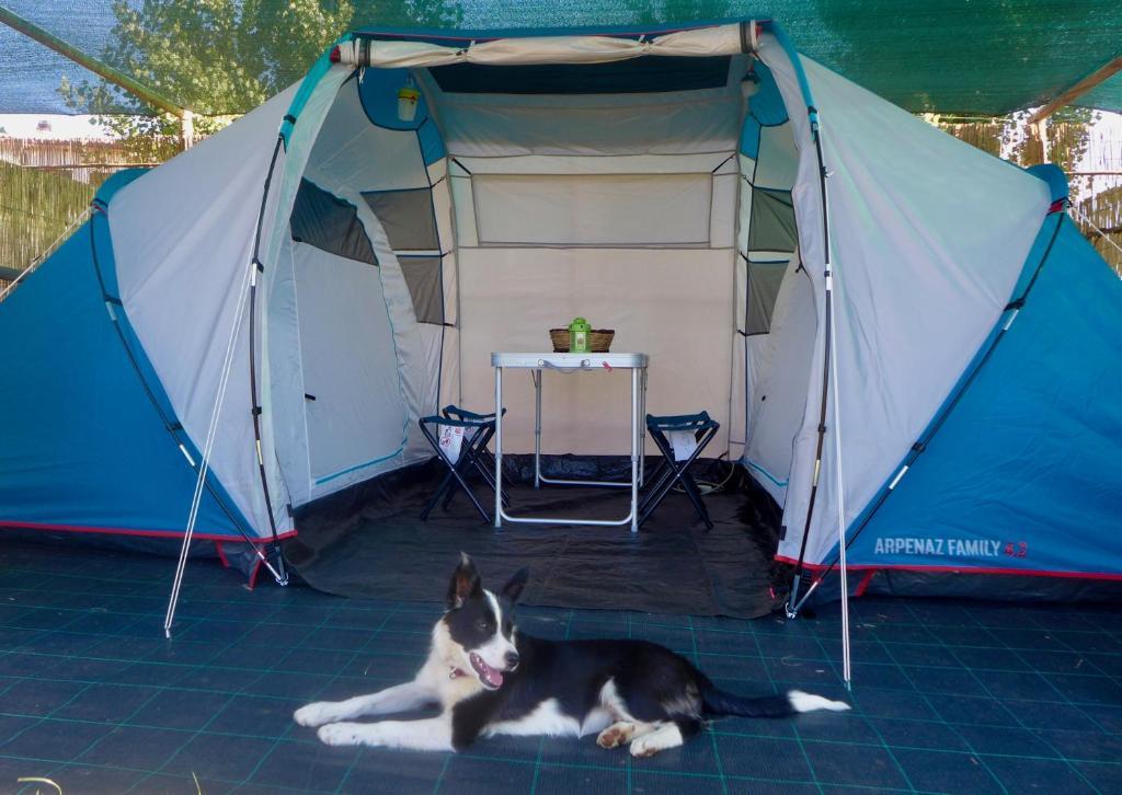 Ospiti di Capalbio Campeggio Rurale con animali domestici