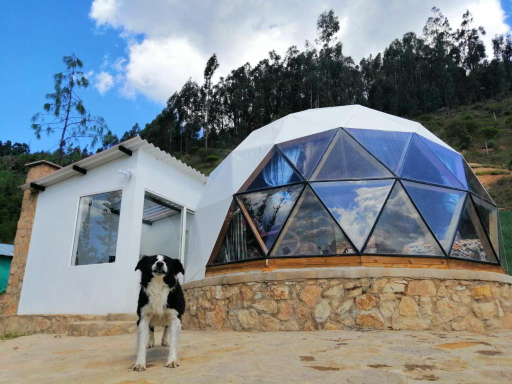 Pet or pets staying with guests at Glamping NIDO VERDE
