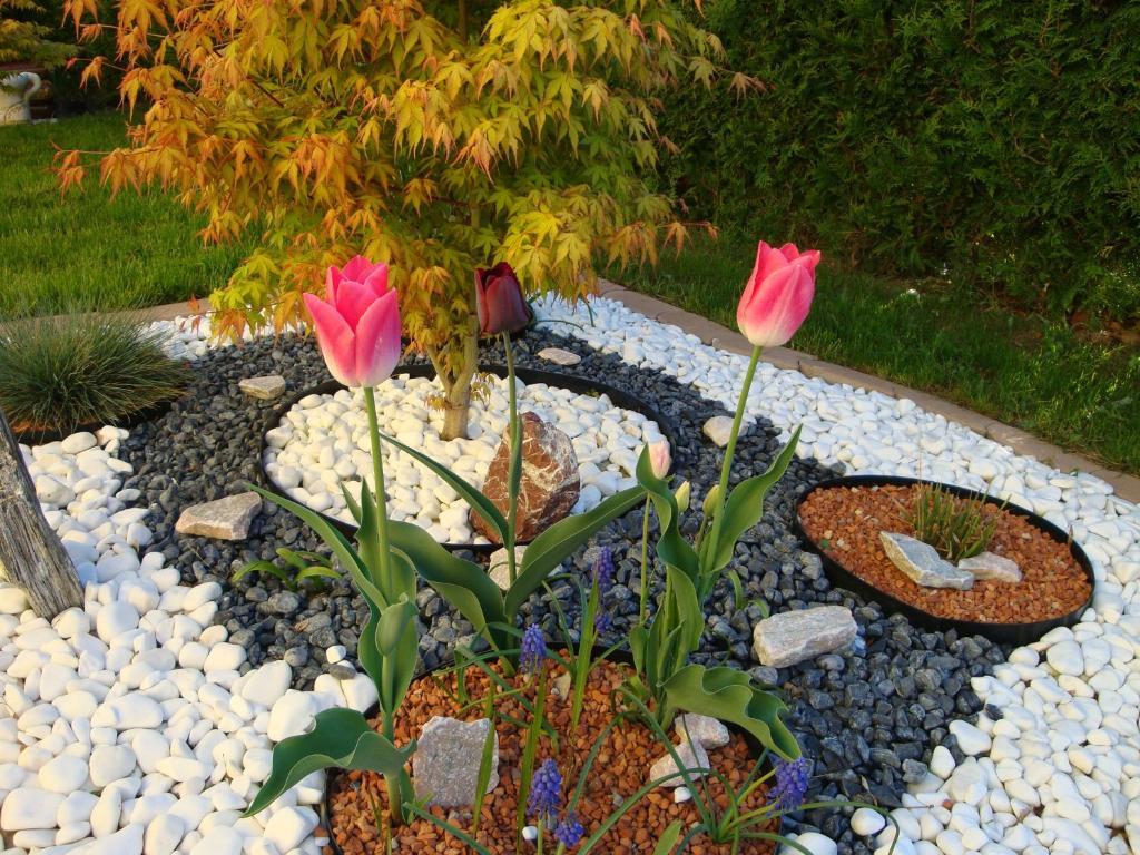 A garden outside YELLOW APARTMAN