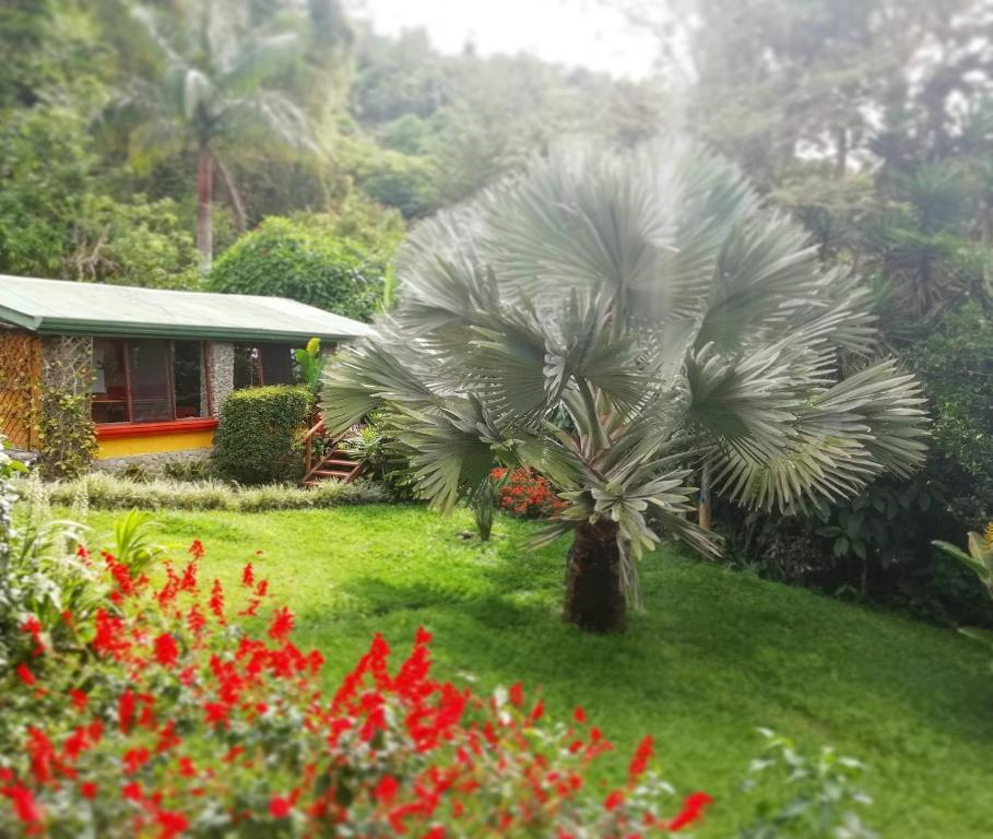 A garden outside Chalet Orosi