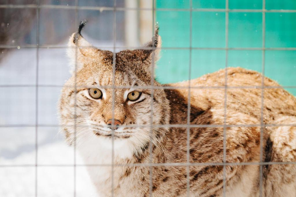 Животные в комплексе для отдыха или окрестностях