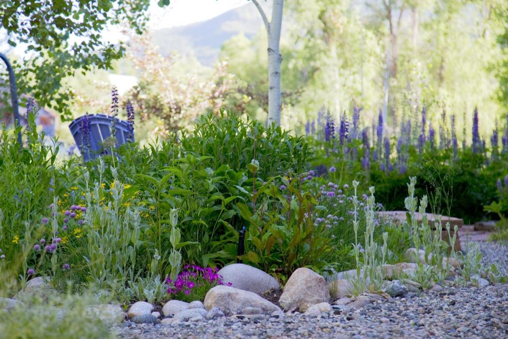 A garden outside Mariposa Lodge Bed and Breakfast