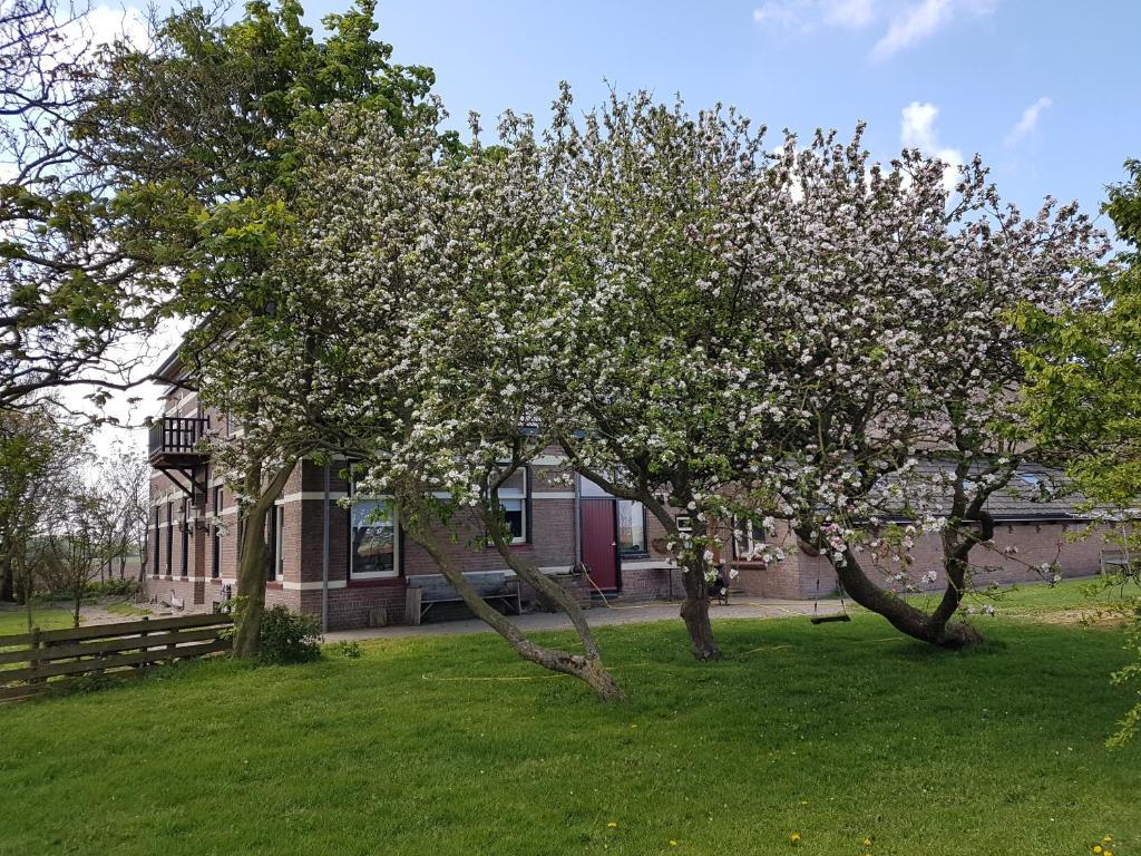 A garden outside Hunsingo Texel