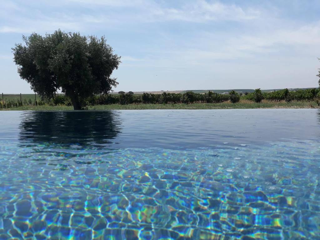 The swimming pool at or near Terras - Agroturismo & Vinhos