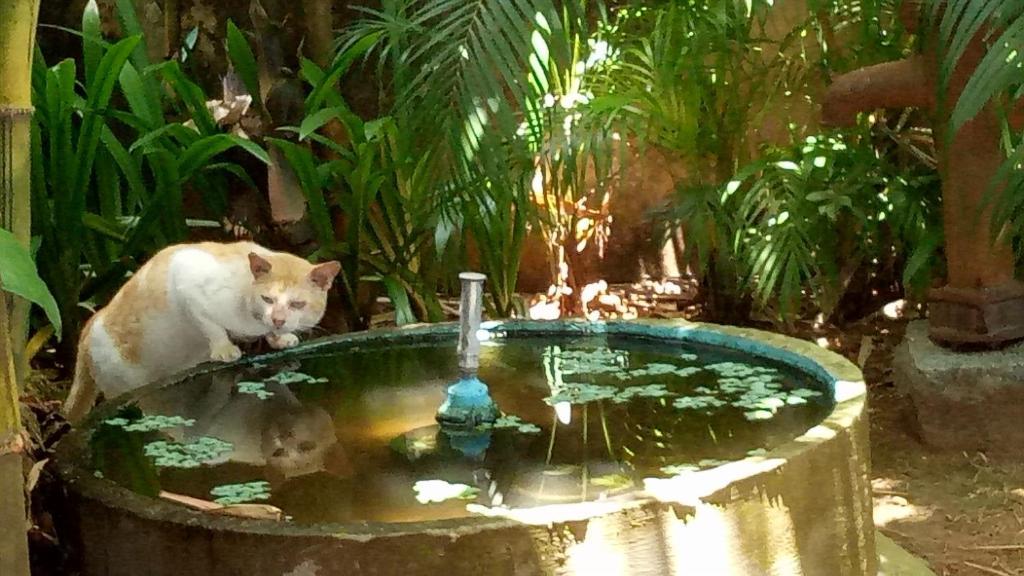 The swimming pool at or near Adams Wood House Ayurveda Homestay Kochi
