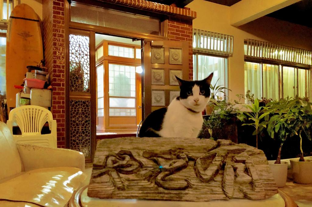 Pet or pets staying with guests at Hostel Yado Ari