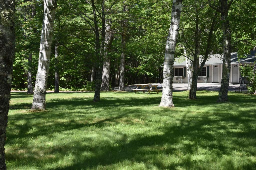 A garden outside Acadia Pines Motel