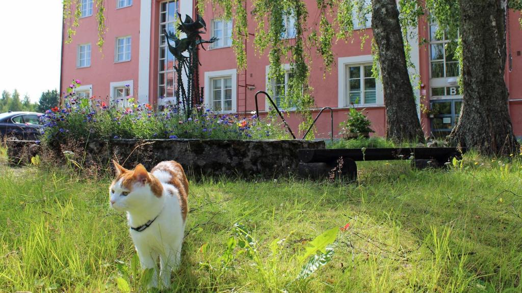 Lemmikki tai lemmikkejä, jotka yöpyvät majoituspaikassa Vanha koulu