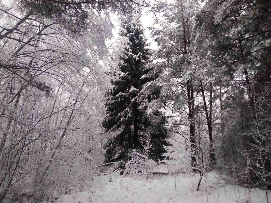Гнездо аиста during the winter