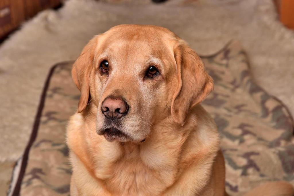 Pet or pets staying with guests at Mediterranean Edmonton B&B