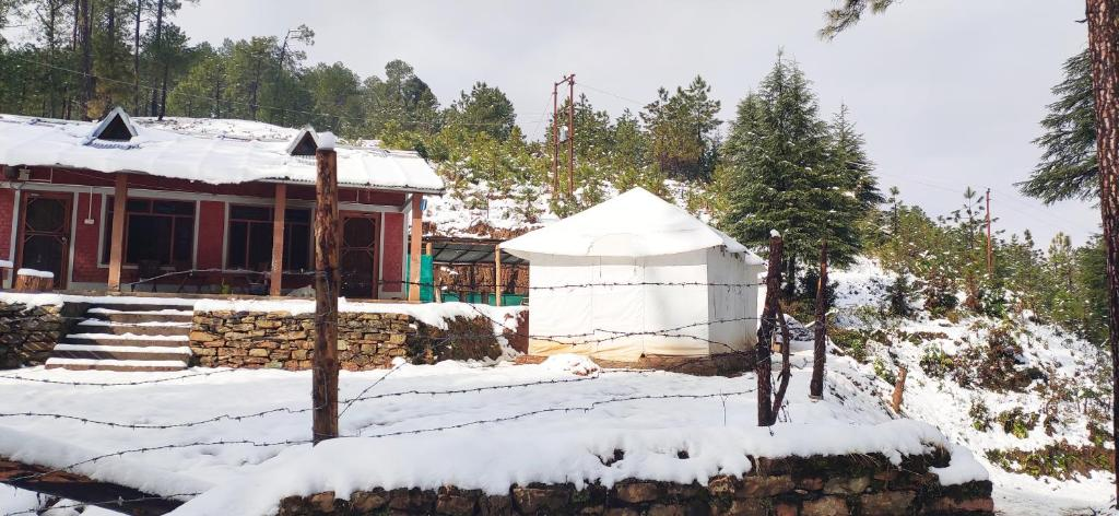 Moustache Woods of Kausani during the winter