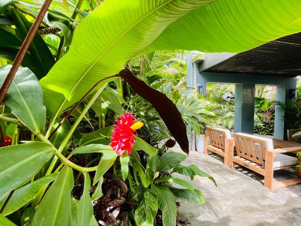 Lahania Lux Beach Villa