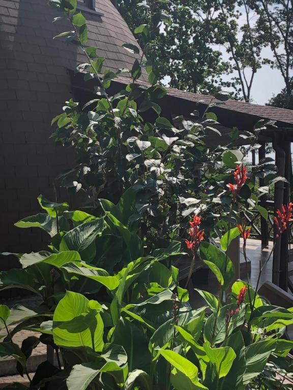 A garden outside Жемчужина
