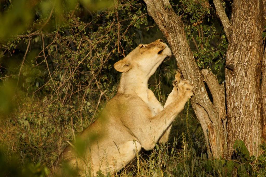 Haustiere von Gästen der Unterkunft Baluleni Safari Lodge