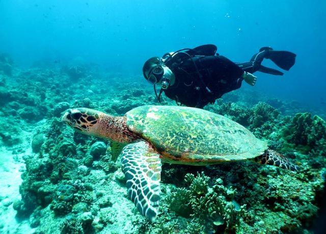 Snorkeling and/or diving at the homestay or nearby