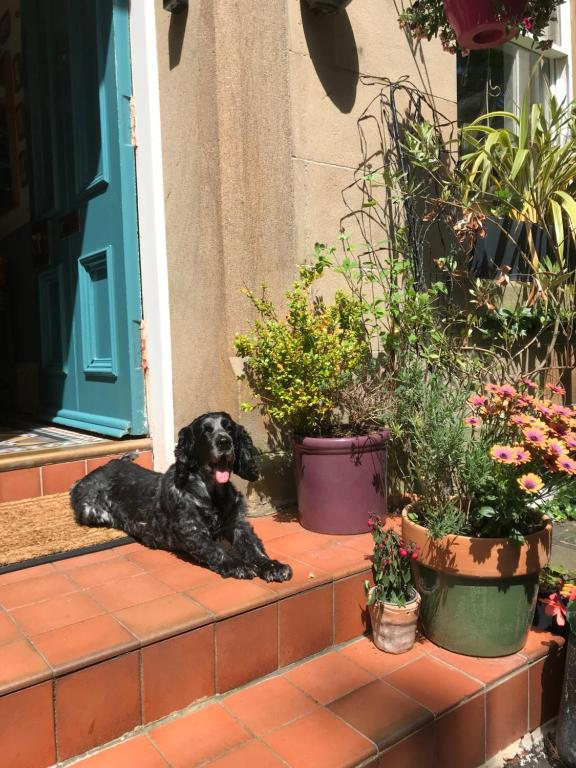 Pet or pets staying with guests at Albyn Townhouse