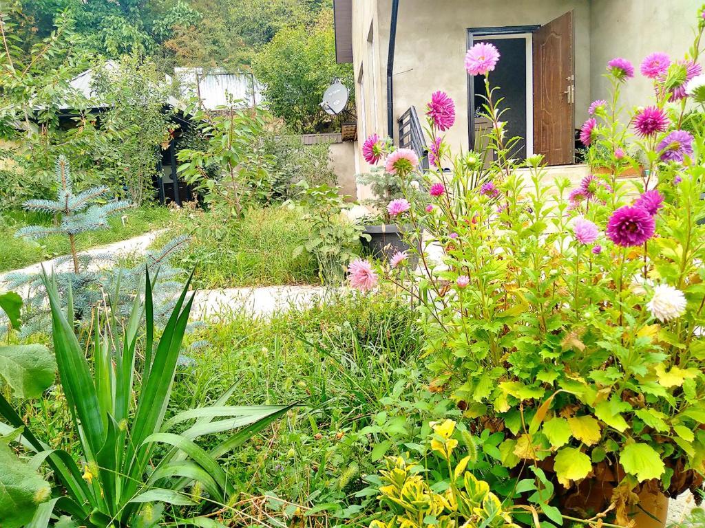 Um jardim em Dom Semya