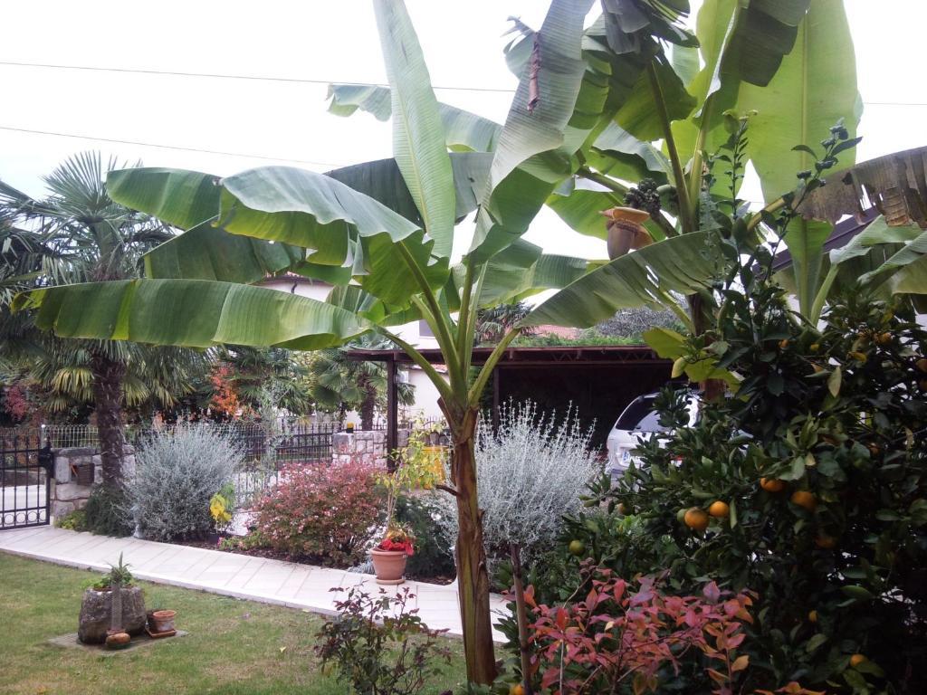 Vonkajšia záhrada v ubytovaní Studio-Ap Mia