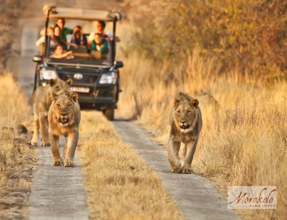 Animal ou animaux domestique(s) séjournant avec des clients dans l'établissement Morokolo Safari Lodges