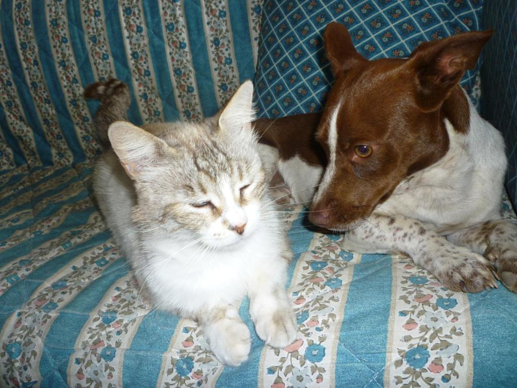 Pet or pets staying with guests at Su Trabi B&B