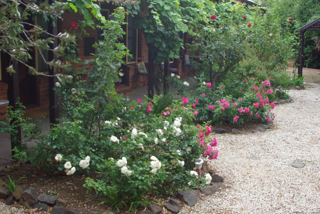 A garden outside Maldon's Eaglehawk Motel